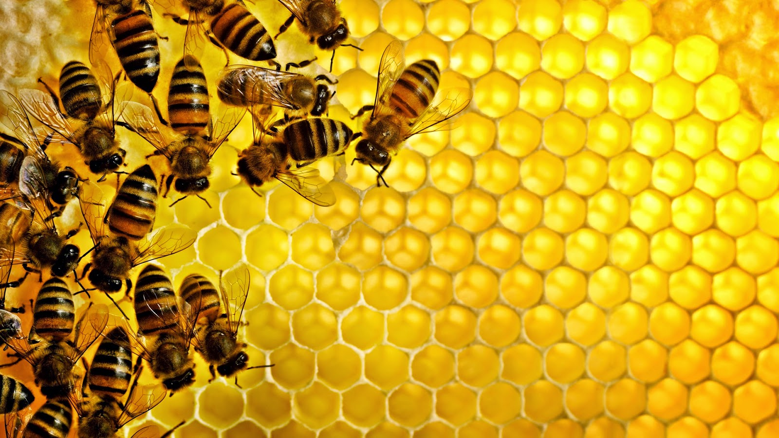Nutrition and health in honey bees